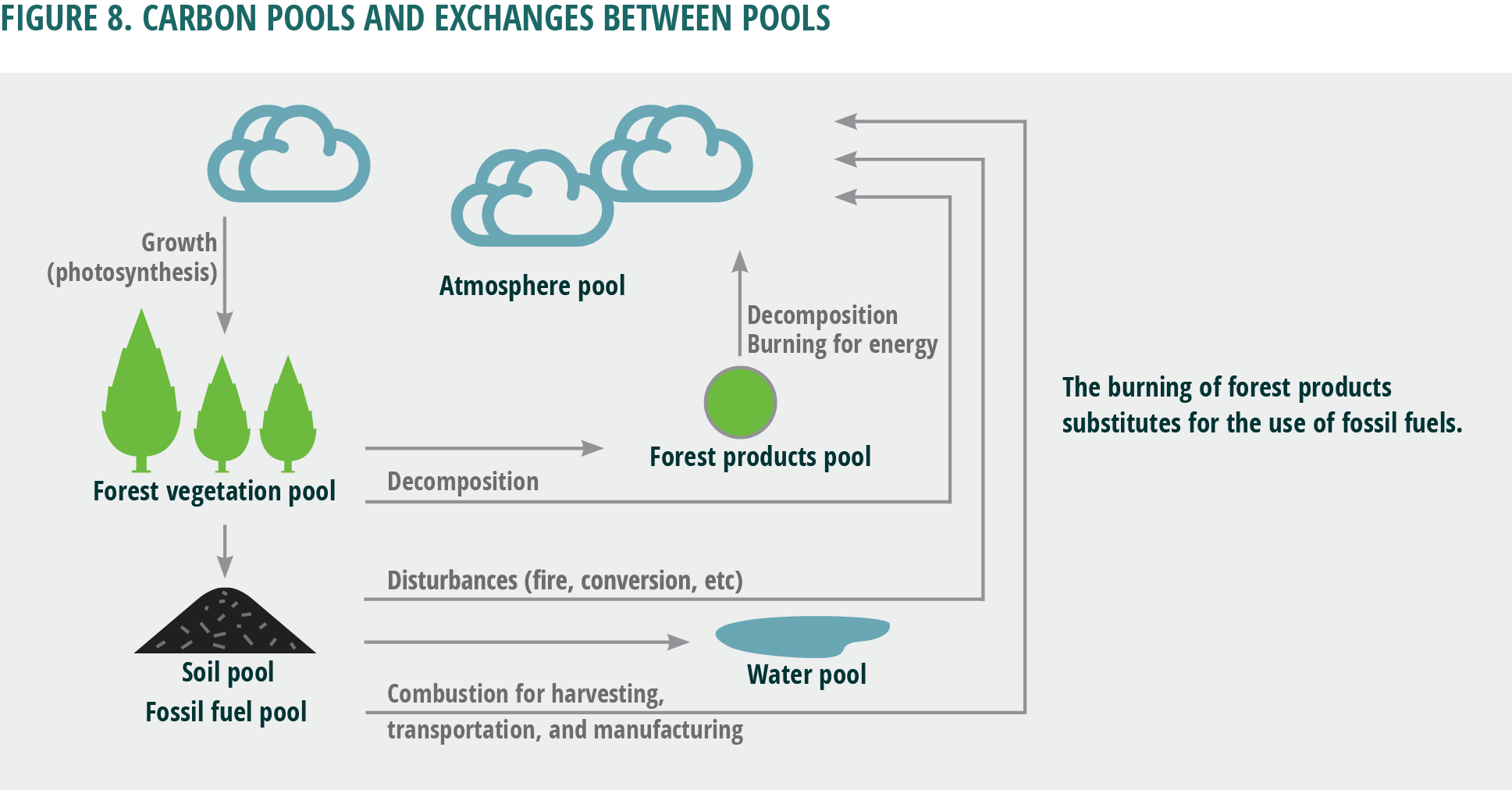Figure 8. Carbon pools and exchanges between pools